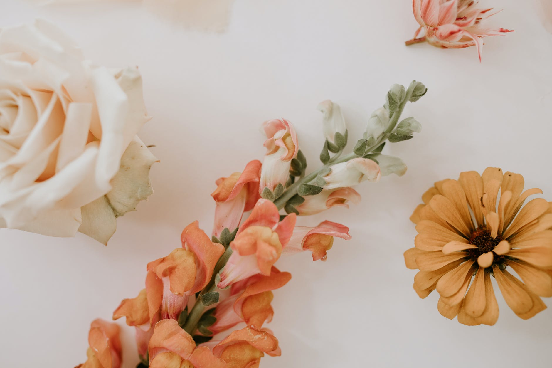 composition of fresh flowers for floral decor